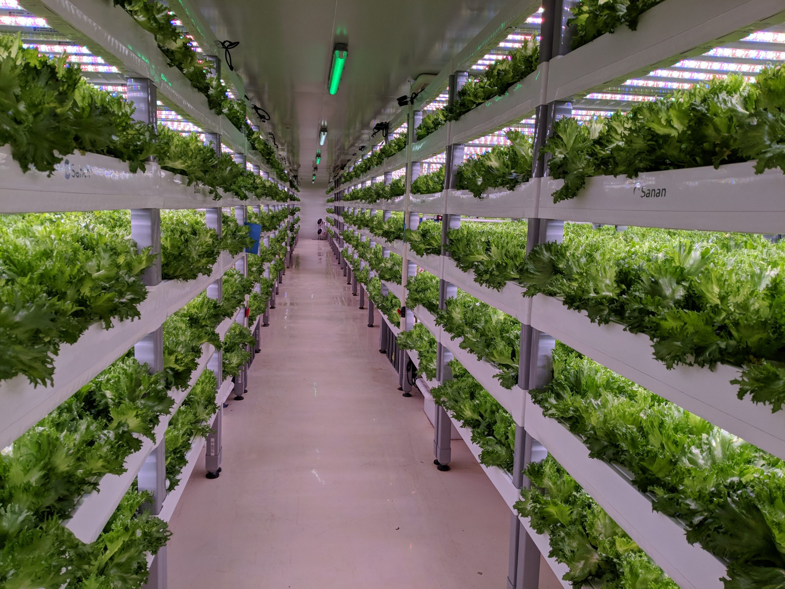 Vertical farming, food, vegetables, agritech, agrifood,